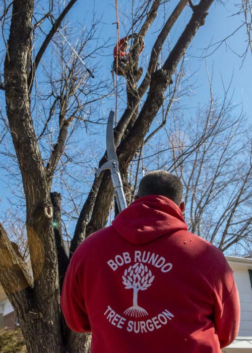 Bob Rundo Tree Surgeon Colorado Springs