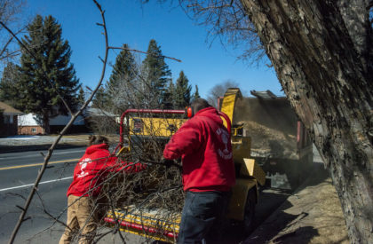 Tree Cleanup Services Colorado Springs