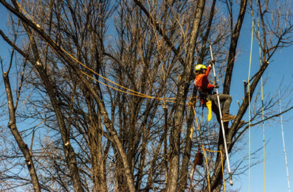 Tree Removal Colorado Springs