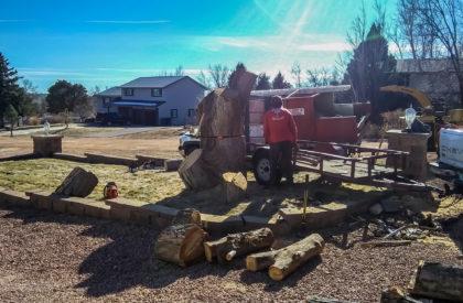 Tree Removal Falcon