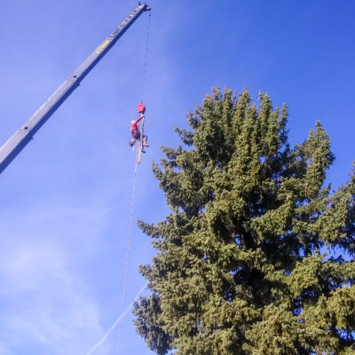 Tree Trimming Colorado Springs